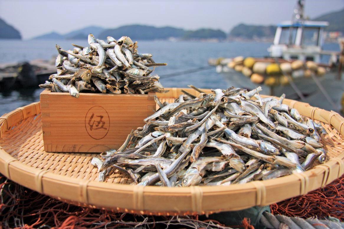 威勢のいい漁師さんの声と船の汽笛がひびくまち-0