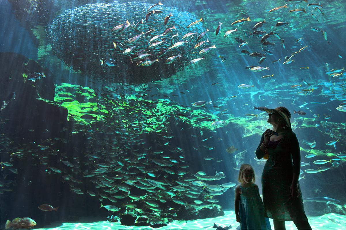 「九十九島」の海の生きものに会いに行こう-0