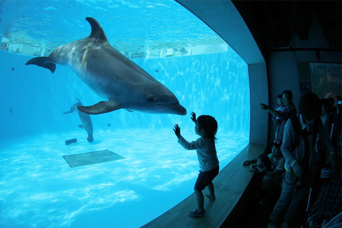 「九十九島」の海の生きものに会いに行こう-2