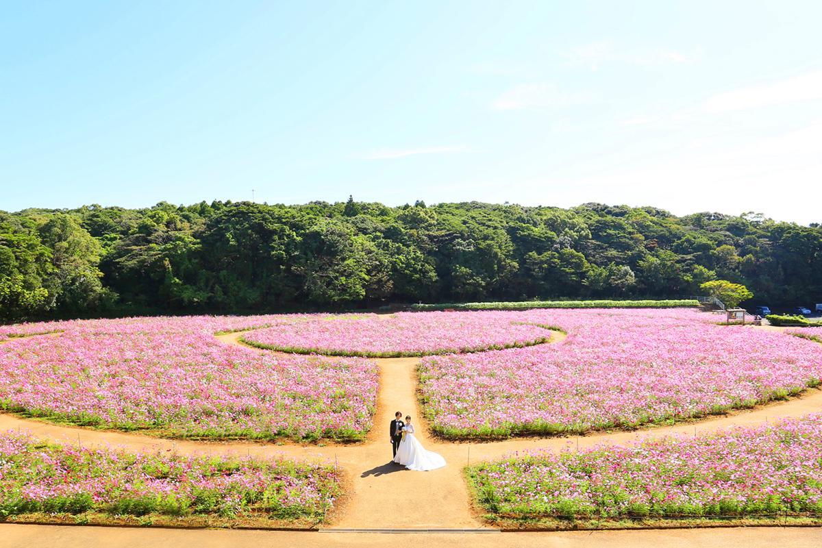 花の迷路とパノラマビューのコラボレーション「展海峰」-3