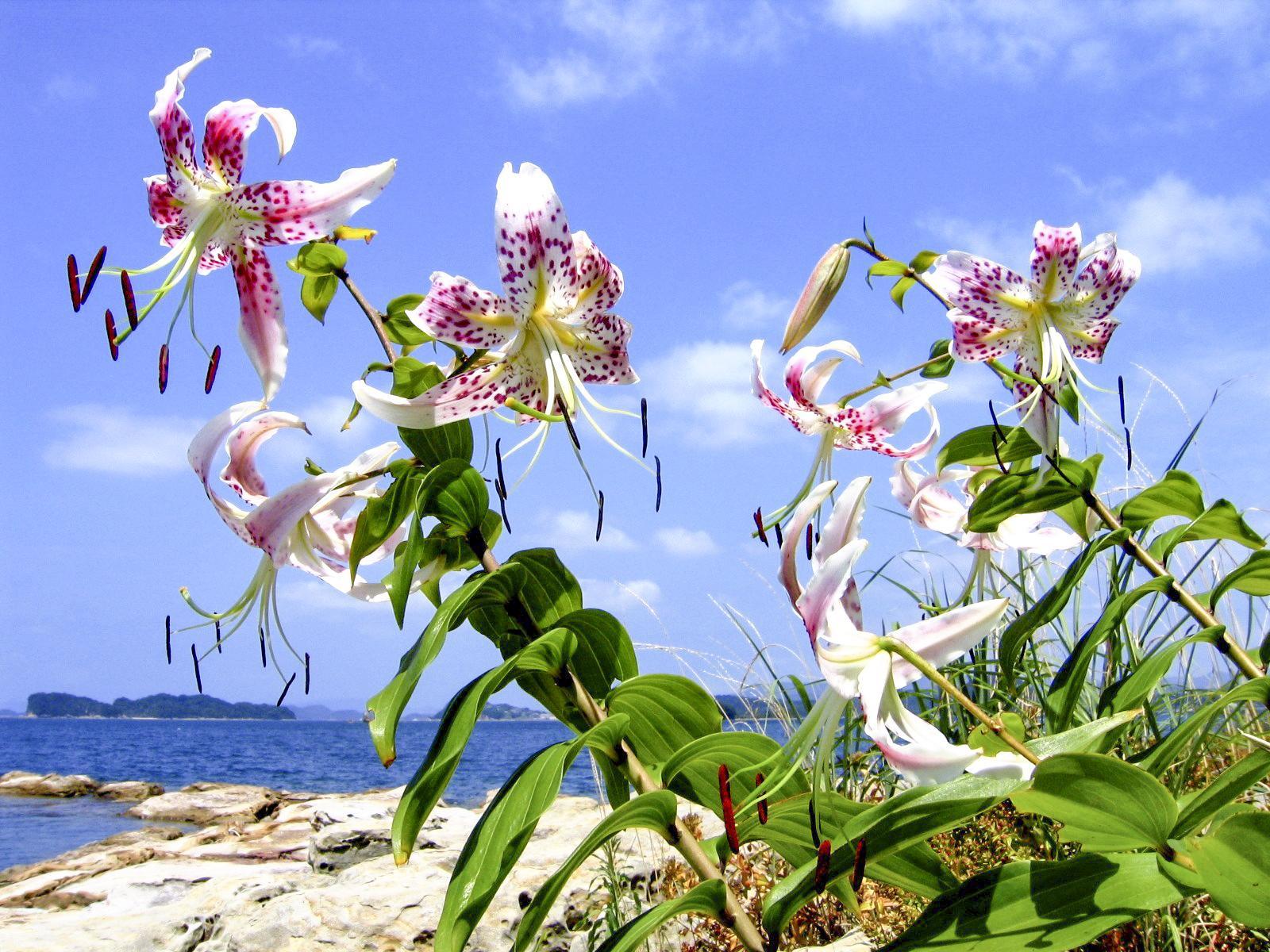 希少な動植物のすまう「西海国立公園」 自然を守るマナー&注意点をチェック!-0