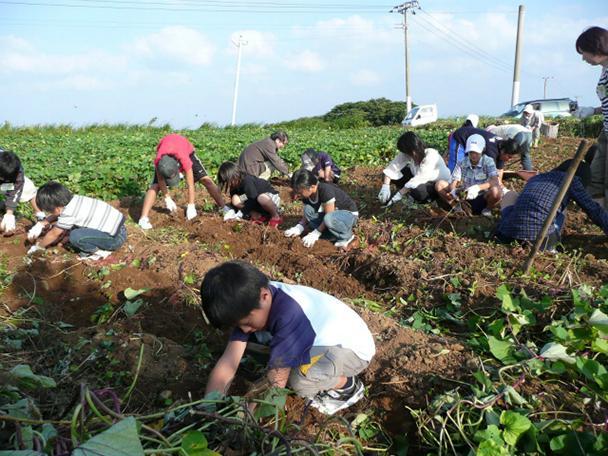 【宇久島】芋植え・芋掘り体験-1