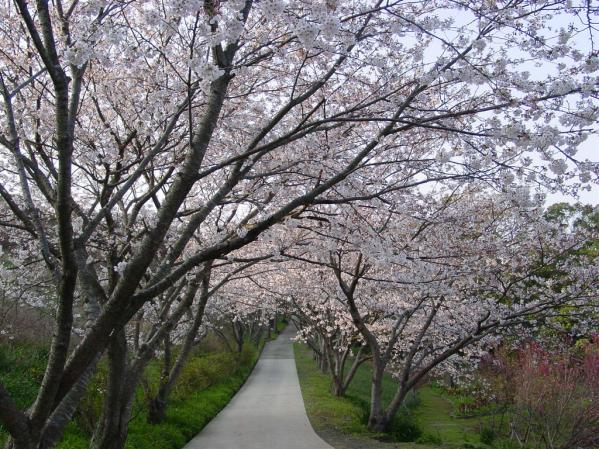 花の森公園-0