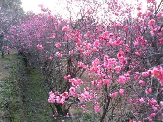 花の森公園-1