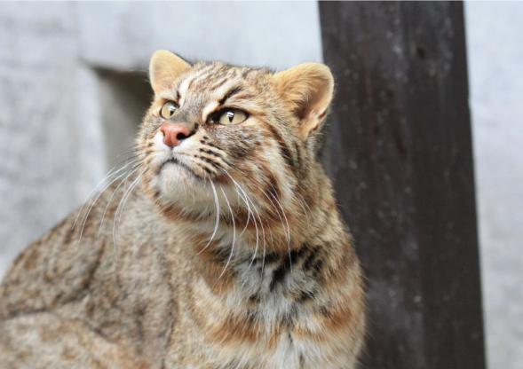 【臨時休業】九十九島動植物園森きらら-3