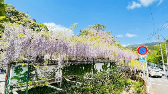 藤山神社-2