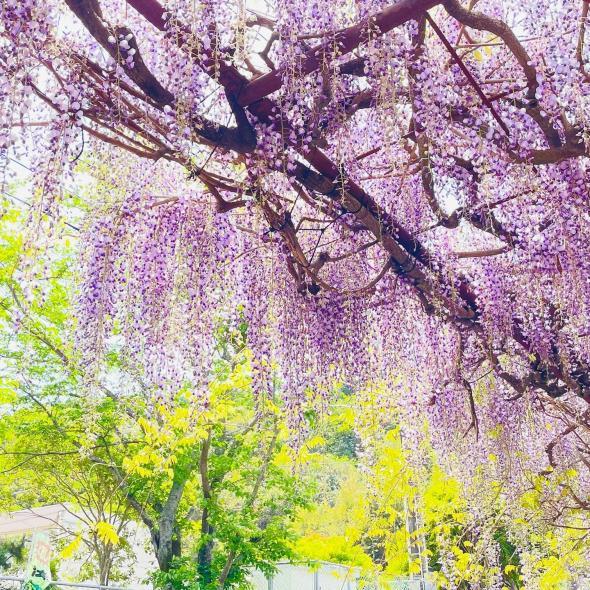 藤山神社-1