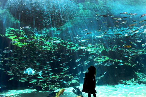 【臨時休業】九十九島水族館 海きらら-0